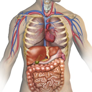 Lets sell our non vital organs ccuart Choice Image